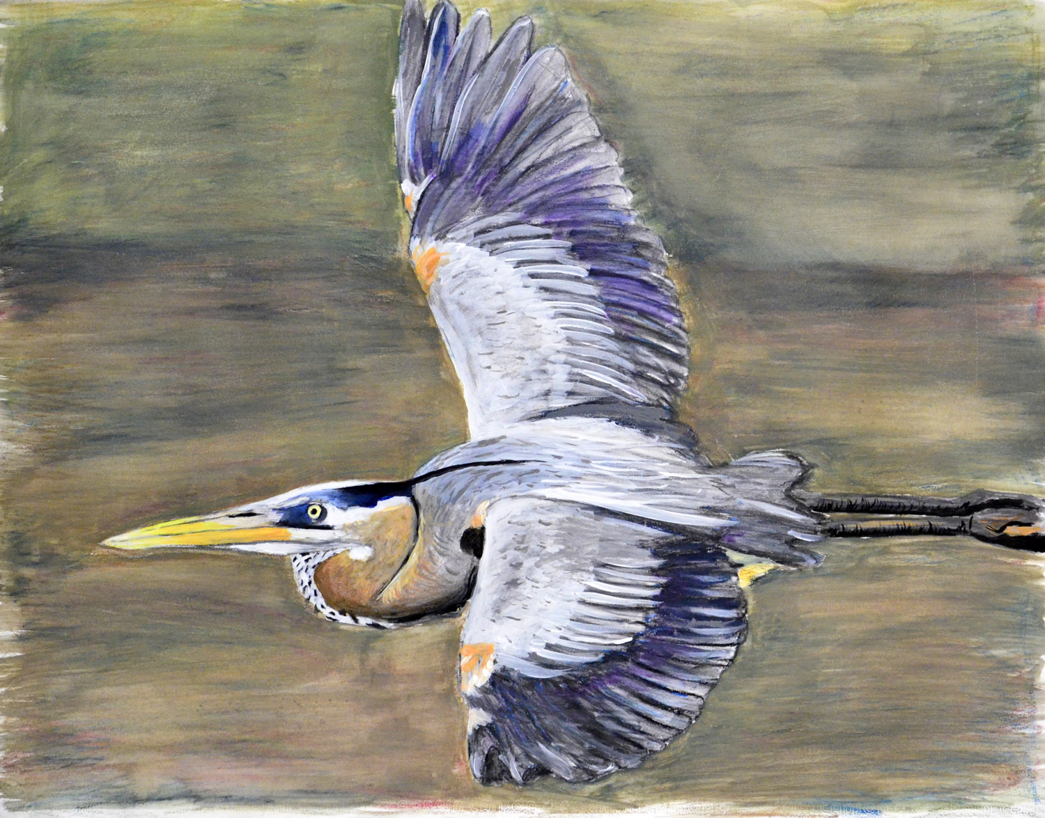 Great Blue Heron oil pastel and acrylic painting, by Billy Reiter