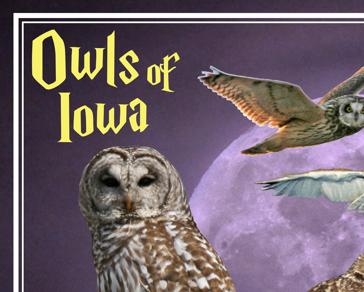 Owls of Iowa poster, by Billy Reiter