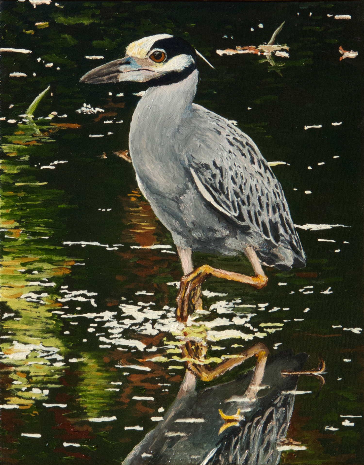 Yellow-crowned Night Heron oil painting, by Billy Reiter