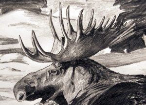 Wildlife Drawings, by Billy Reiter