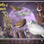 Bird Identification Posters, by Billy Reiter-Marolf