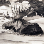Moose drawing, by Billy Reiter
