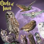 Owls of Iowa poster, by Billy Reiter